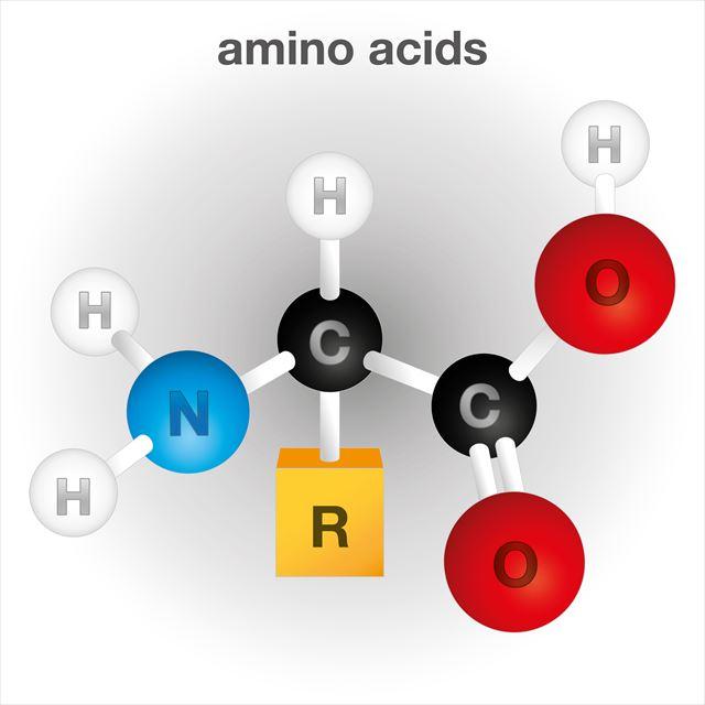 アミノ酸構成を表す図